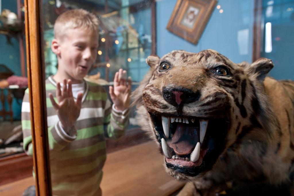 Top 10 bezoek Fryslan Natuurmuseum tijdens overnachting bij Camperplaats Leeuwarden
